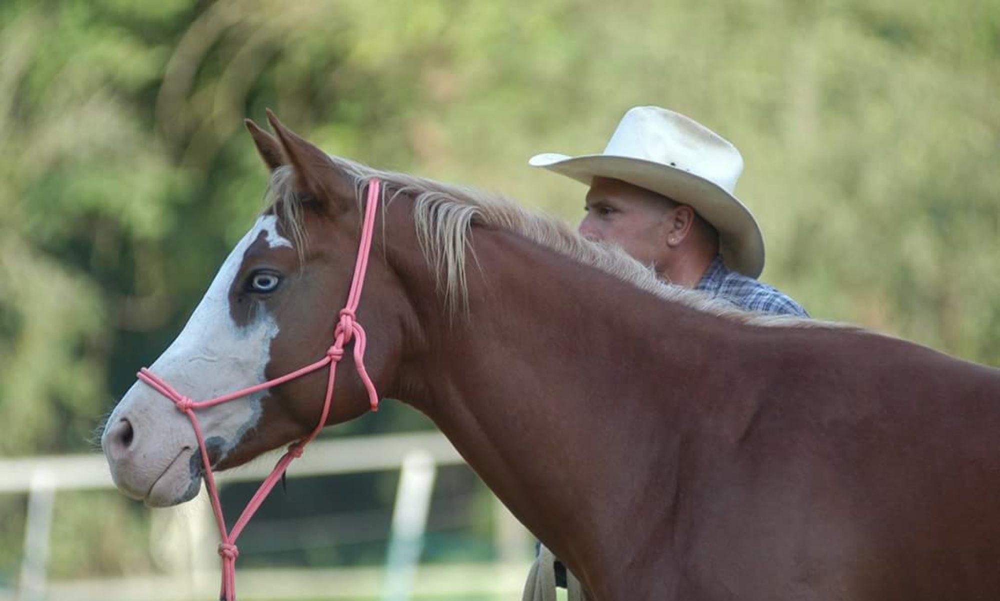 Sergio Matteoni Horsemanship